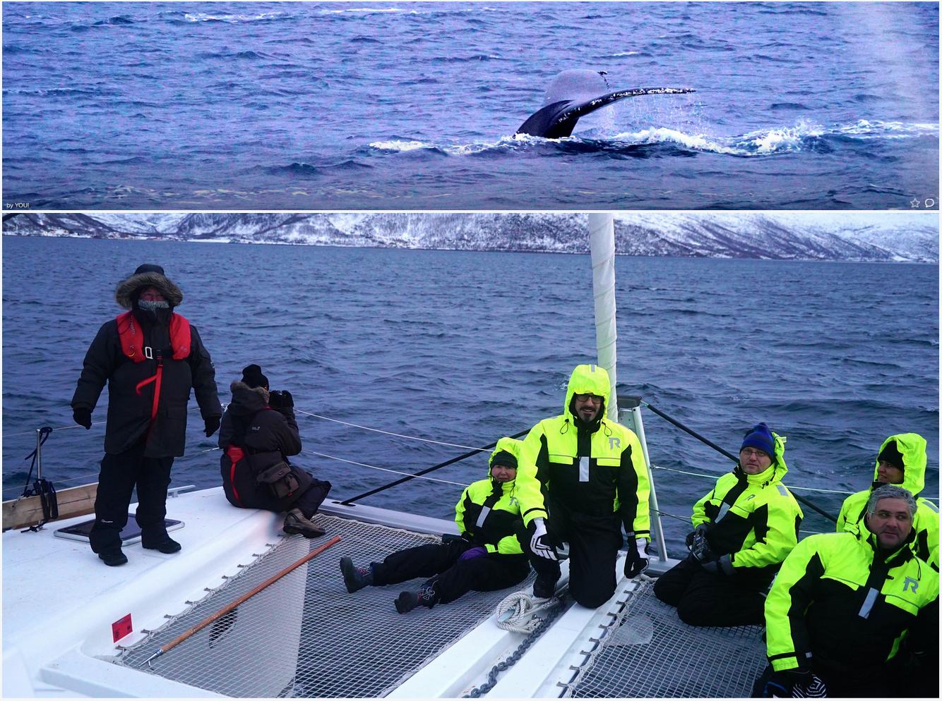 Whalesafari |Tromso | Arctic Princess