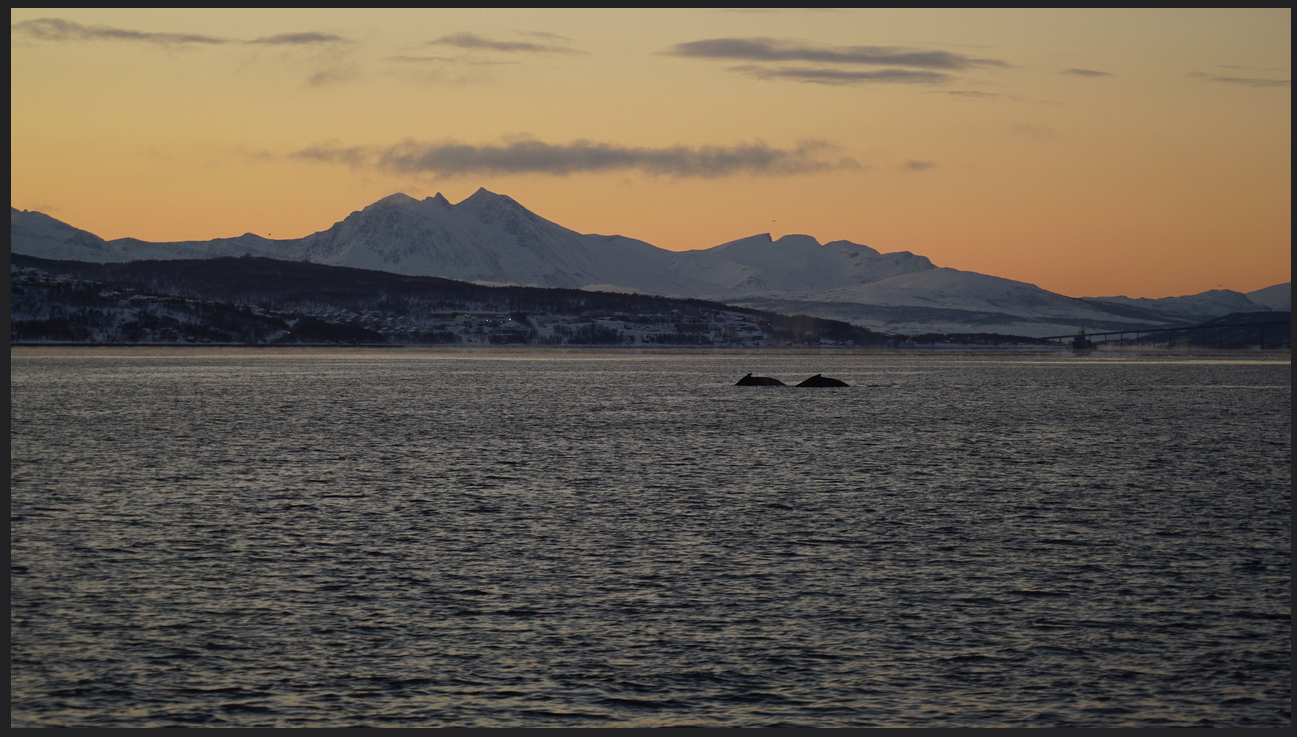 #Whalesafari | Fishing | #Tromso