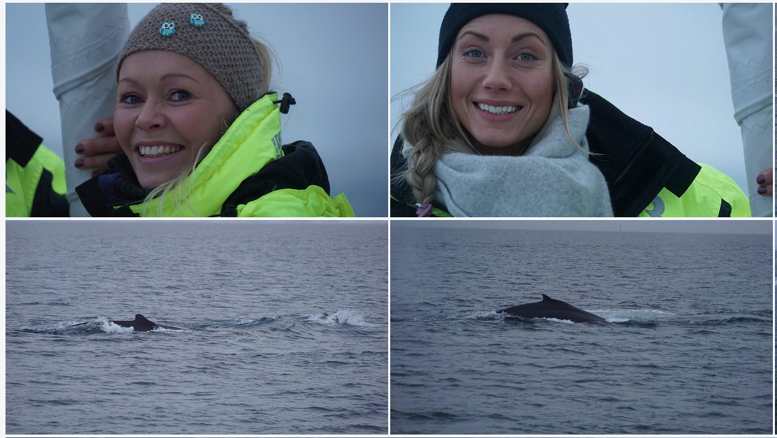 Hvalsafari og fisketur med Arctic Princess | Tromsø