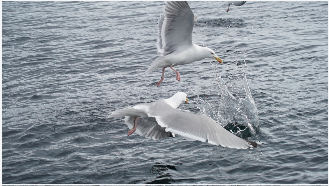 #Fishing #Seaguls #Tromso #Princess Emi #VIP