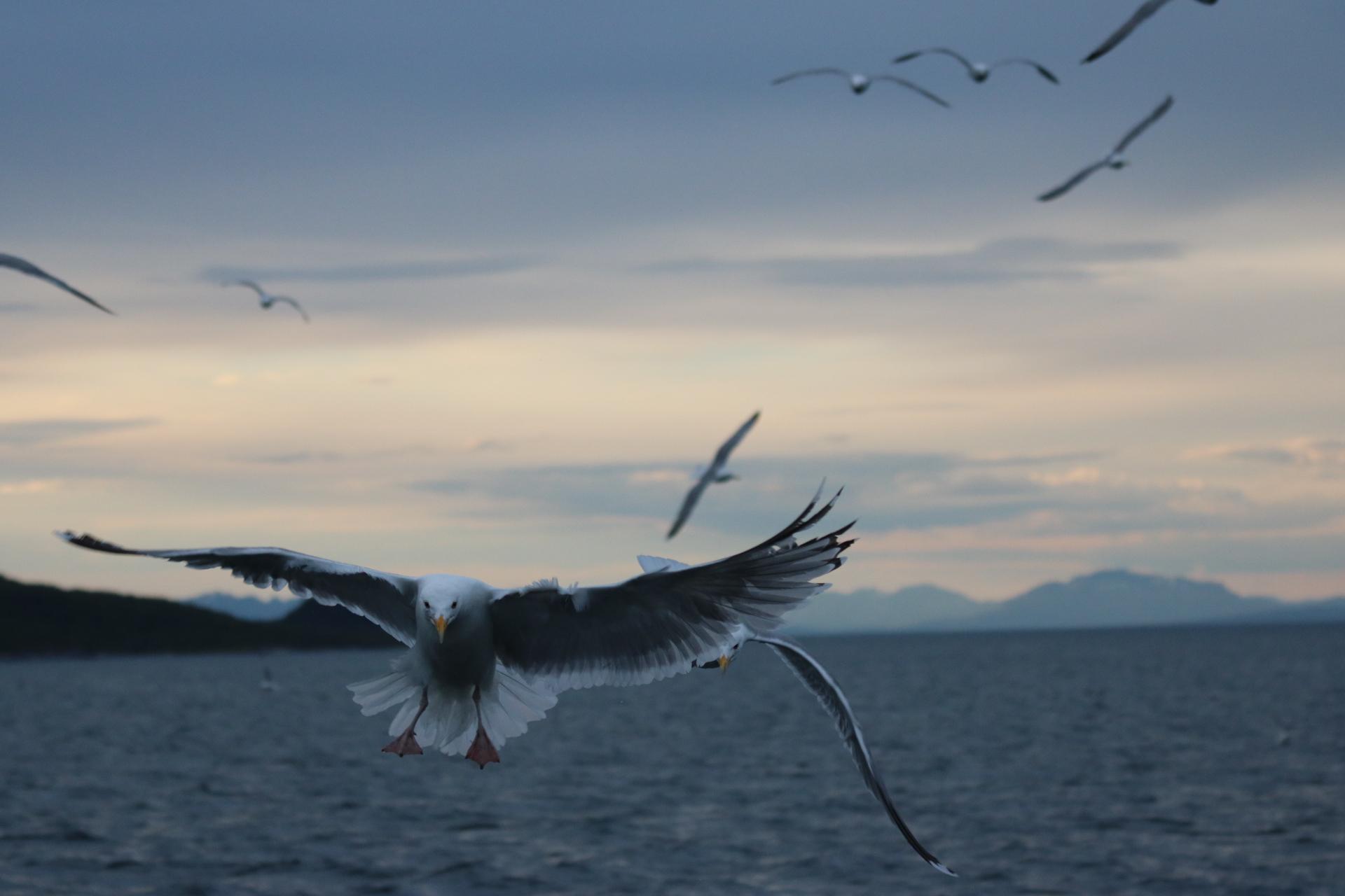 #Lofoten | #Arctic Princcess