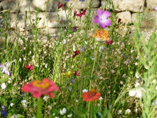 Wild flower garden, The French Muse