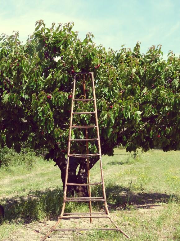 ladder-e13729558041851.jpg