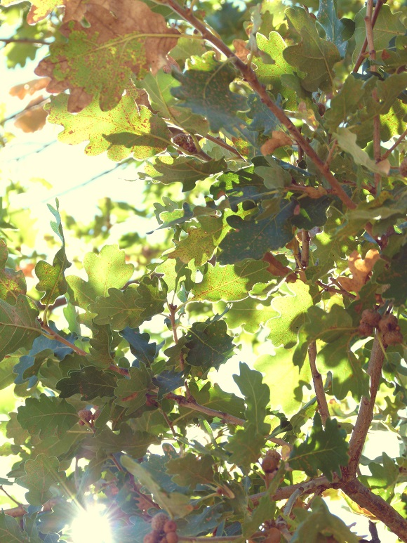leaves-sml1.jpg