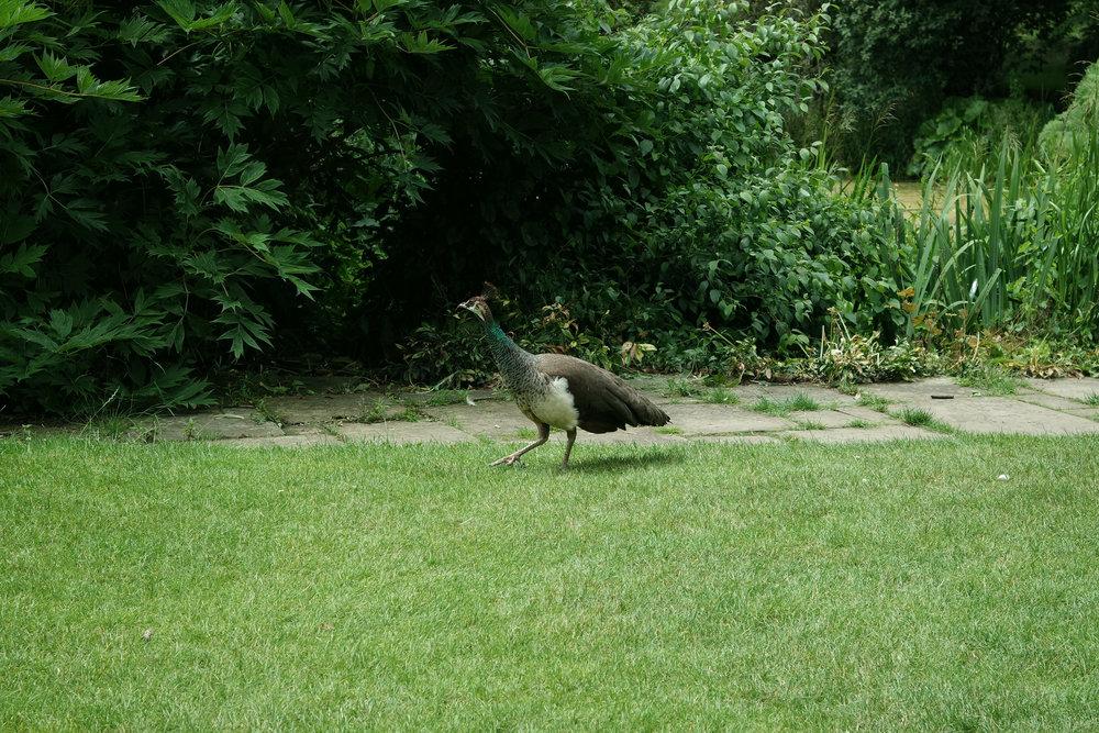 Kew-Gardens-14.jpg