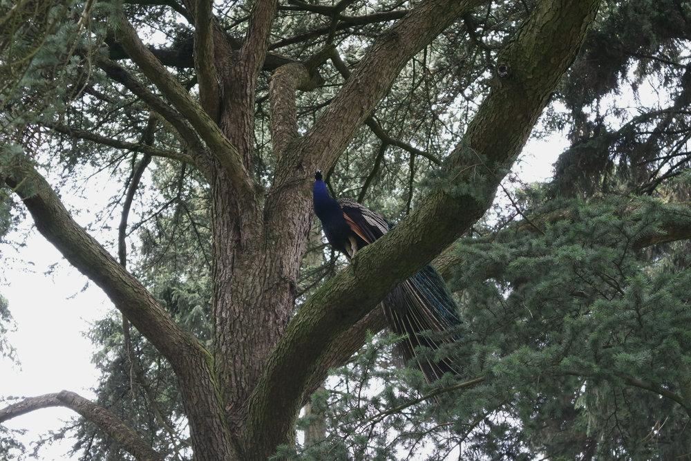 Kew-Gardens-22.jpg