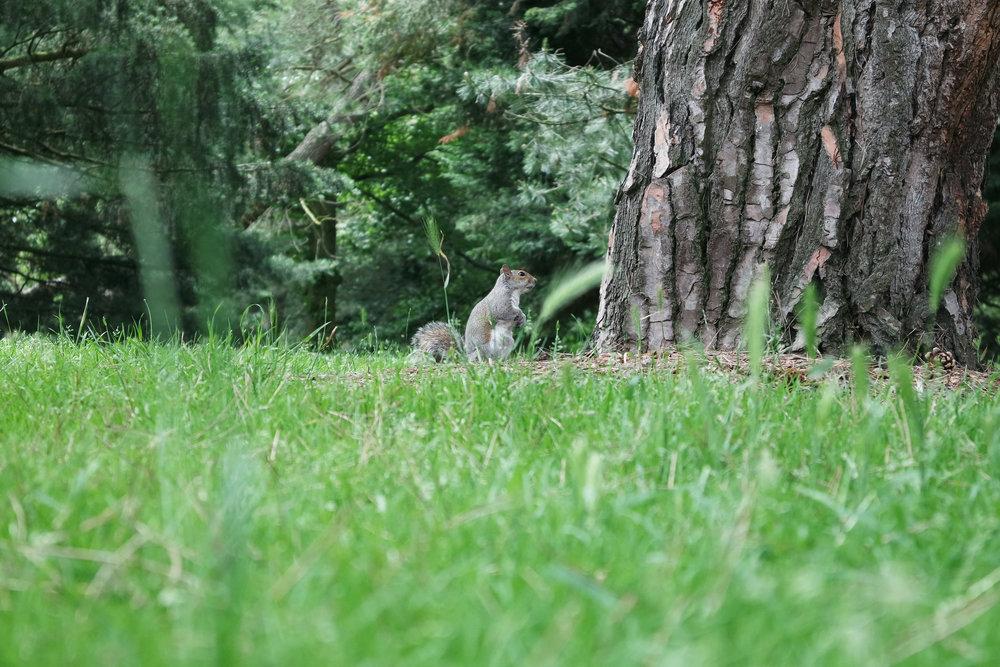 Kew-Gardens-23.jpg