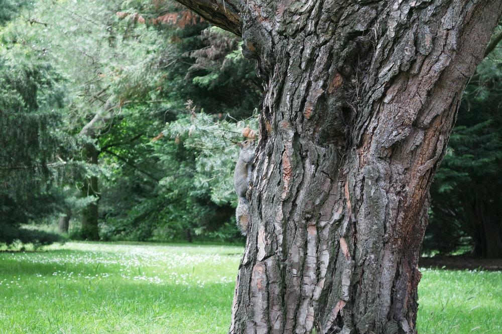 Kew-Gardens-24.jpg