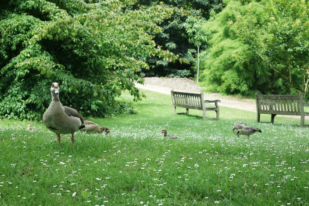 Kew-Gardens-25.jpg
