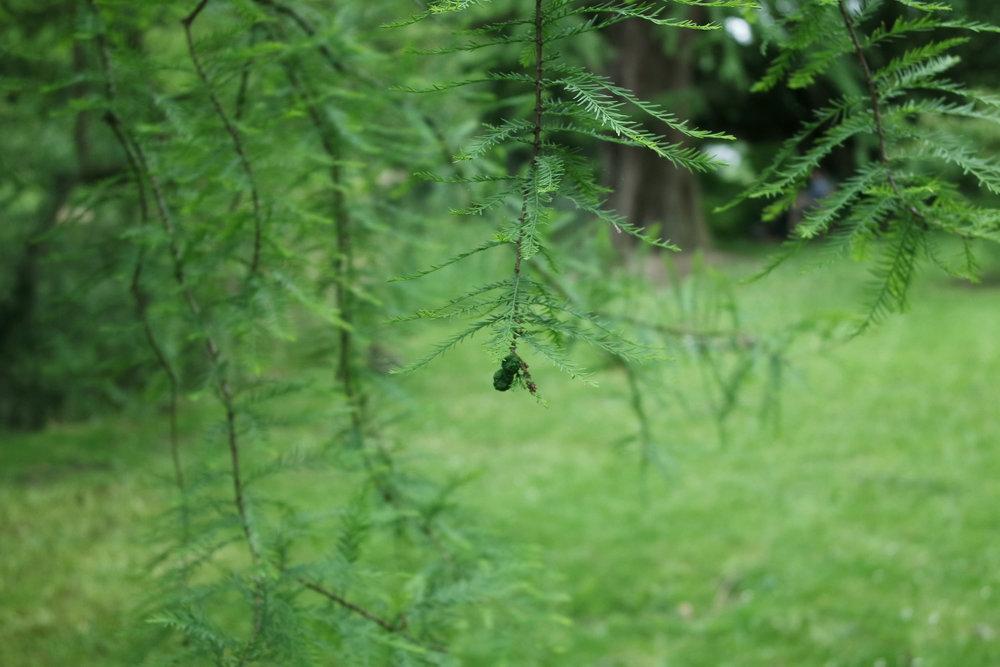 Kew-Gardens-32.jpg