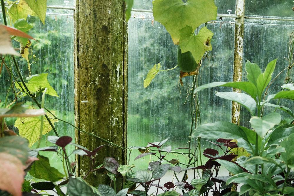 Kew-Gardens-37.jpg