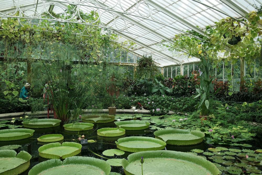kew-Gardens-36.jpg