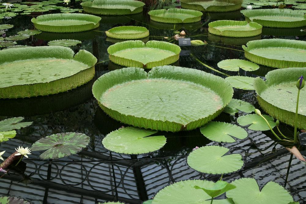 Kew-Gardens-39.jpg