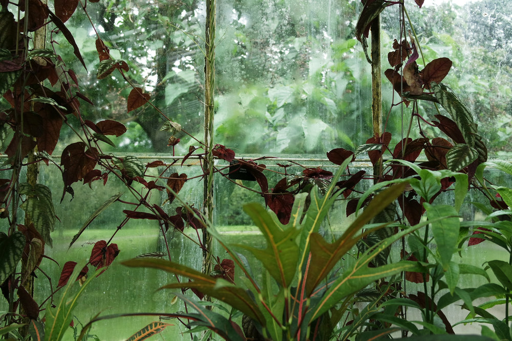 Kew-Gardens-38.jpg