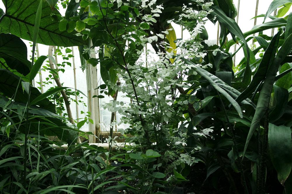 Kew-Gardens-41.jpg