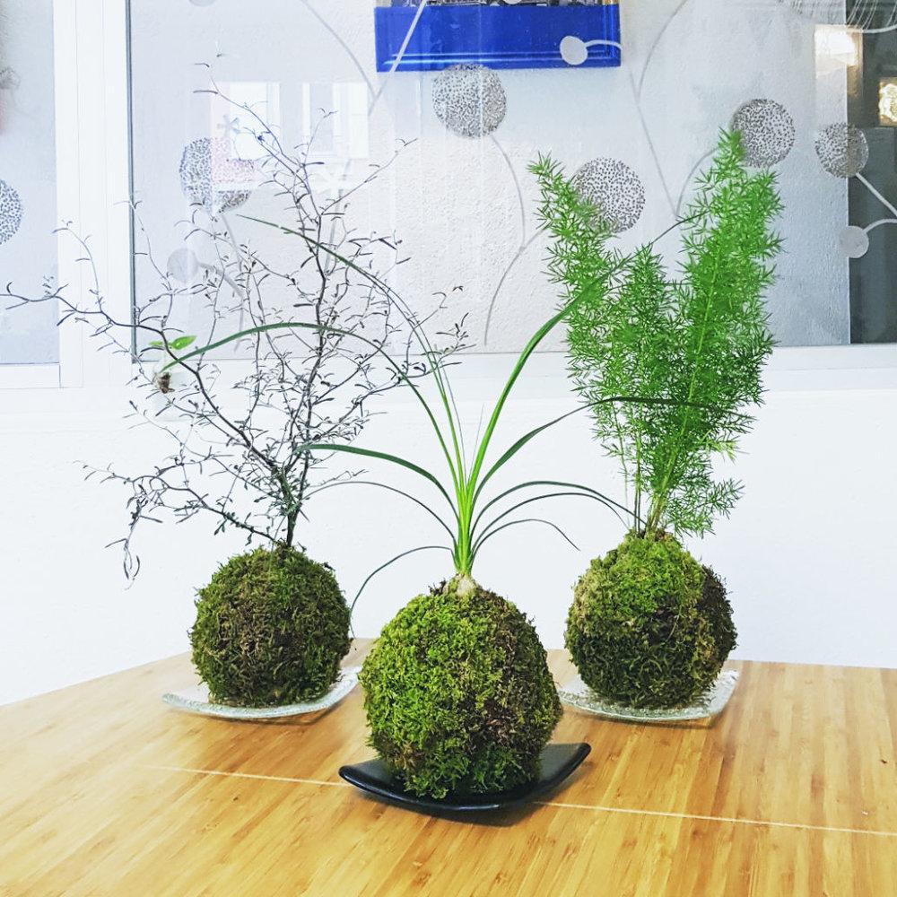 Les Kokedamas - Création végétale originaire du Japon,réelle mise en valeur décorative des végétaux, elle s'adapte à toute sorte d'environnements et son entretien est simple.Prix: 35.- CHF