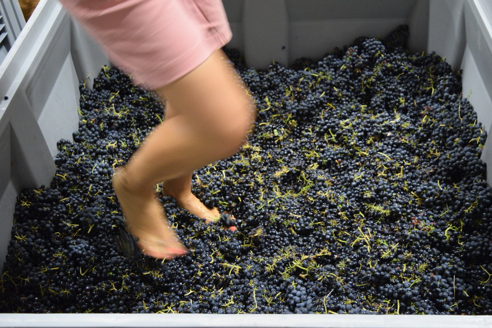 - Foot StompingAll wine we produce goes through foot stomping. Apart from tradition, this enables us to see, smell, and feel the quality of the fruit. All fruit is whole-clustered, and by foot stomping we extract the juices without breaking the stems. Plus, it's fun!