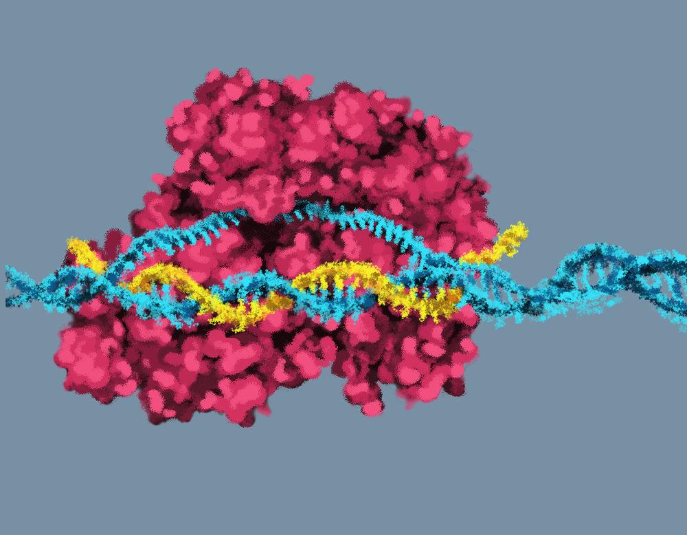 Digital Illustration for scientific website.