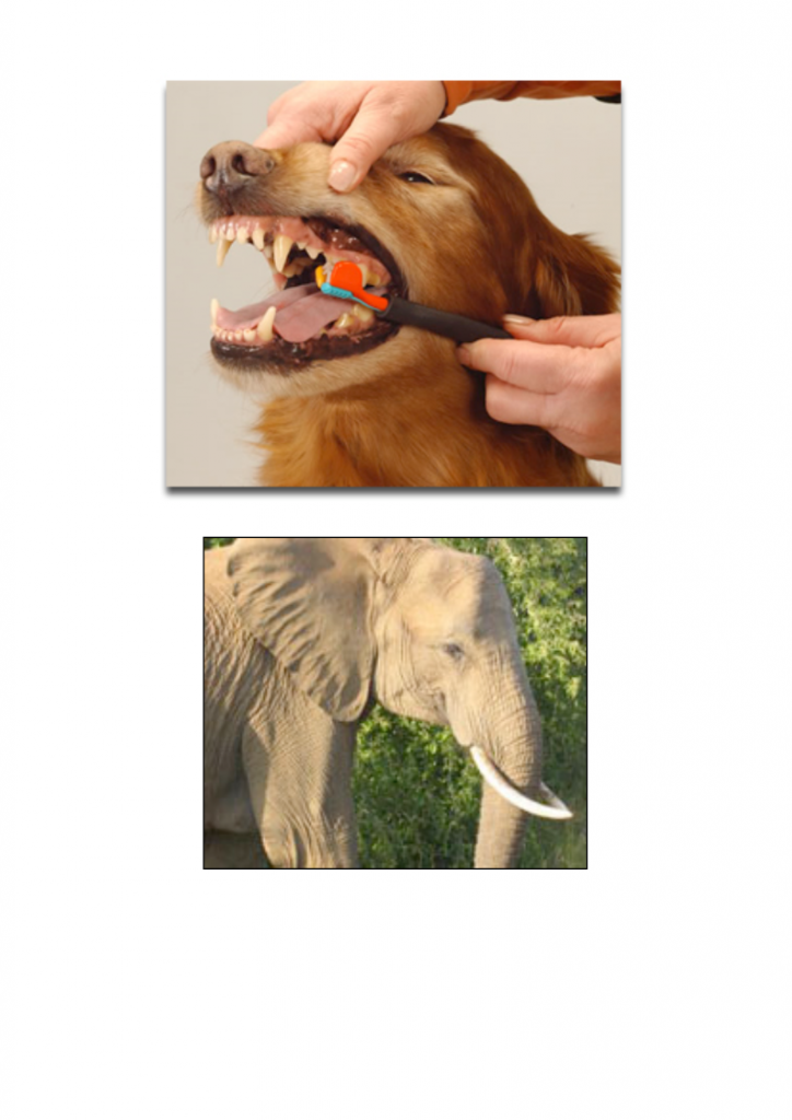 21God-gave-us-teeth-lessonEng_005-724x1024.png