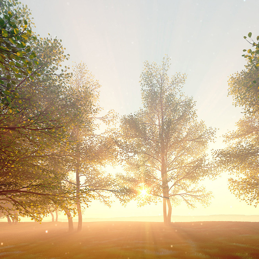 Landscape-virtual-trees.jpg