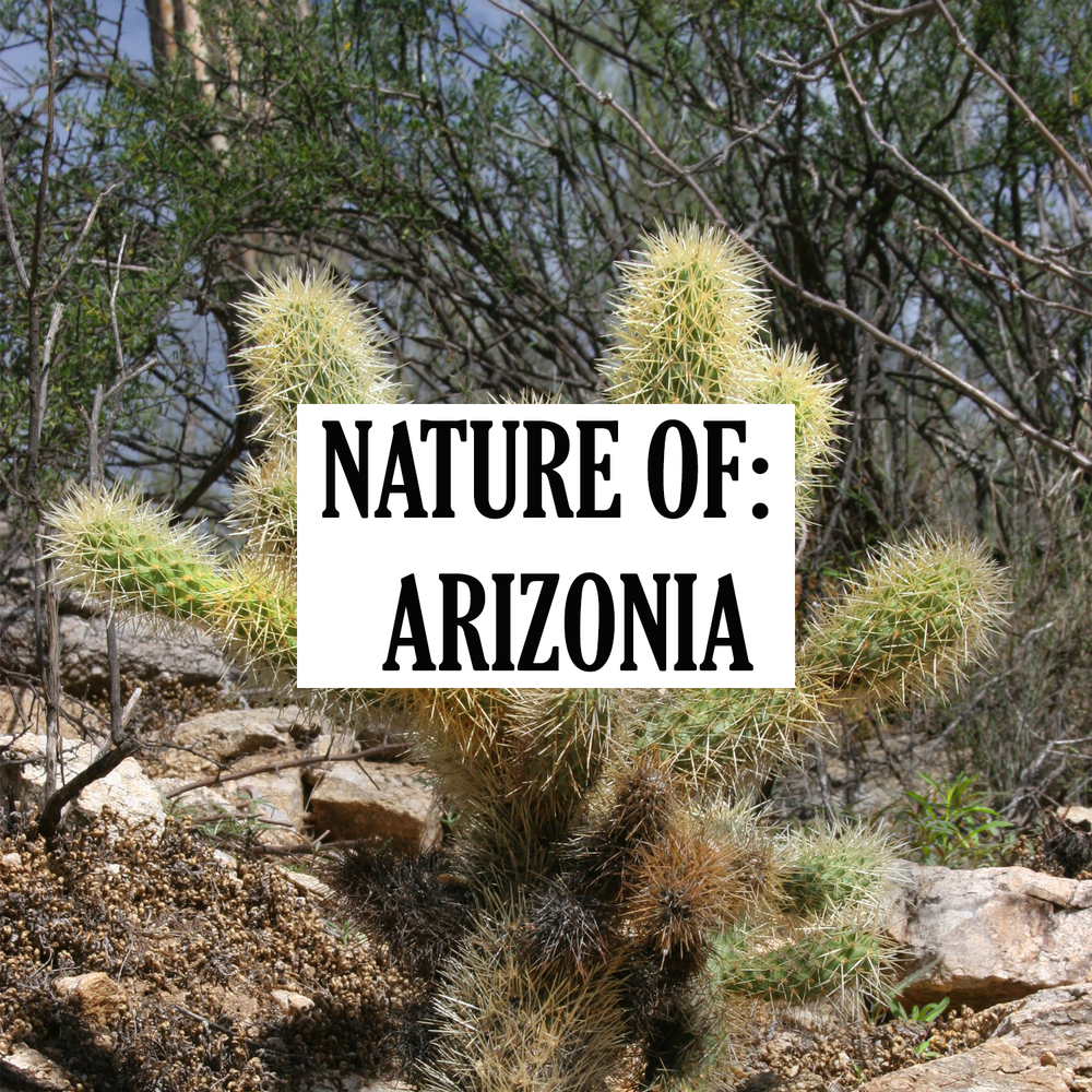 nature-of-arizonia-thumbnail.png