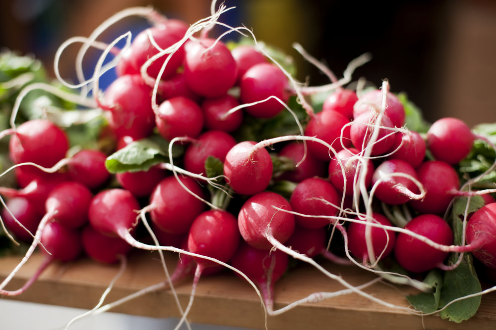 Bunches of Radishes.jpg