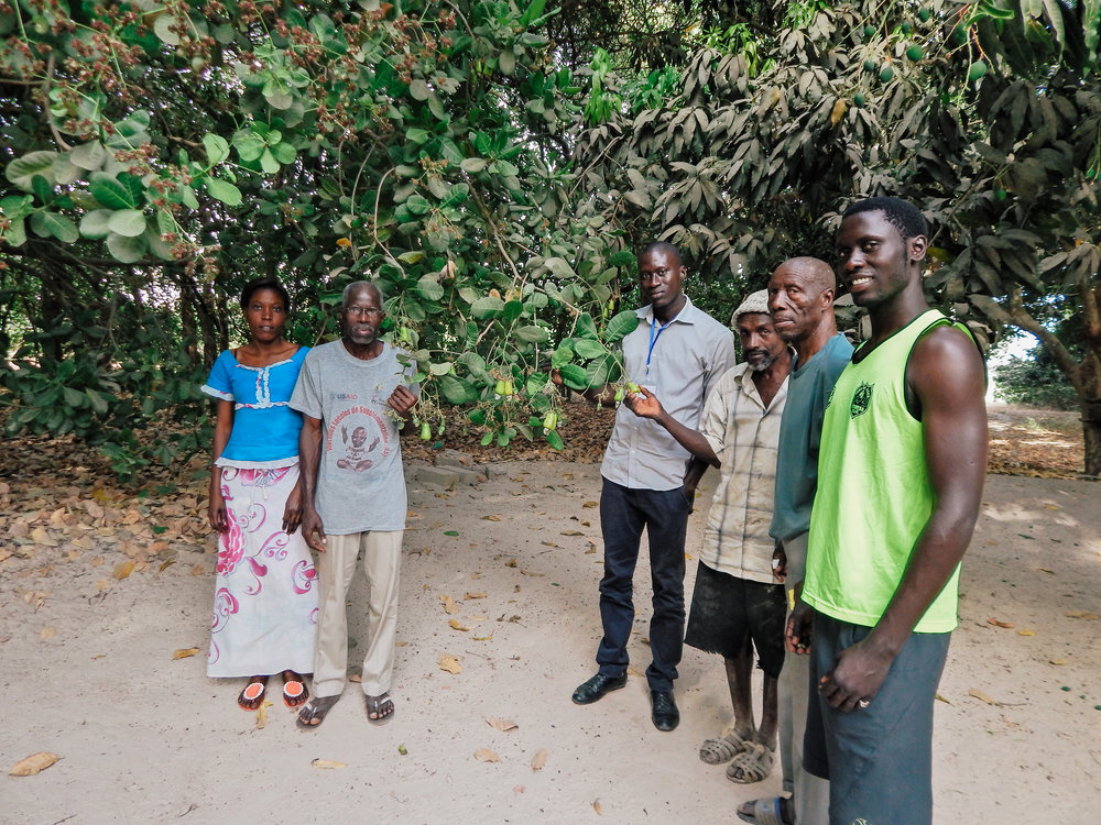 Local farming family with one of their cashew trees