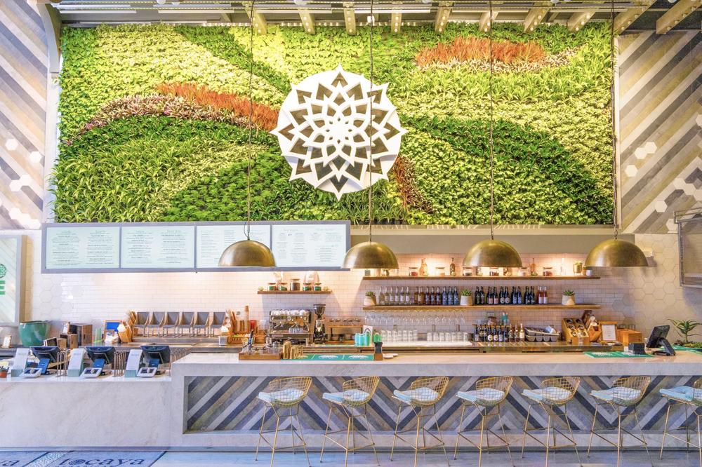 Tocaya Organica | San Diego