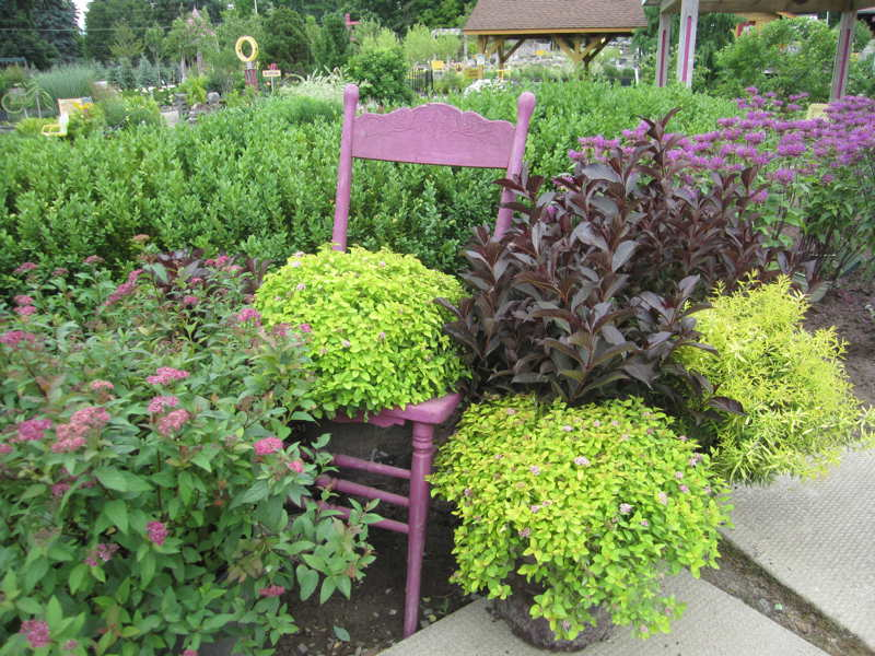 Sundrop Spirea w/ Wine & Rose Weigela