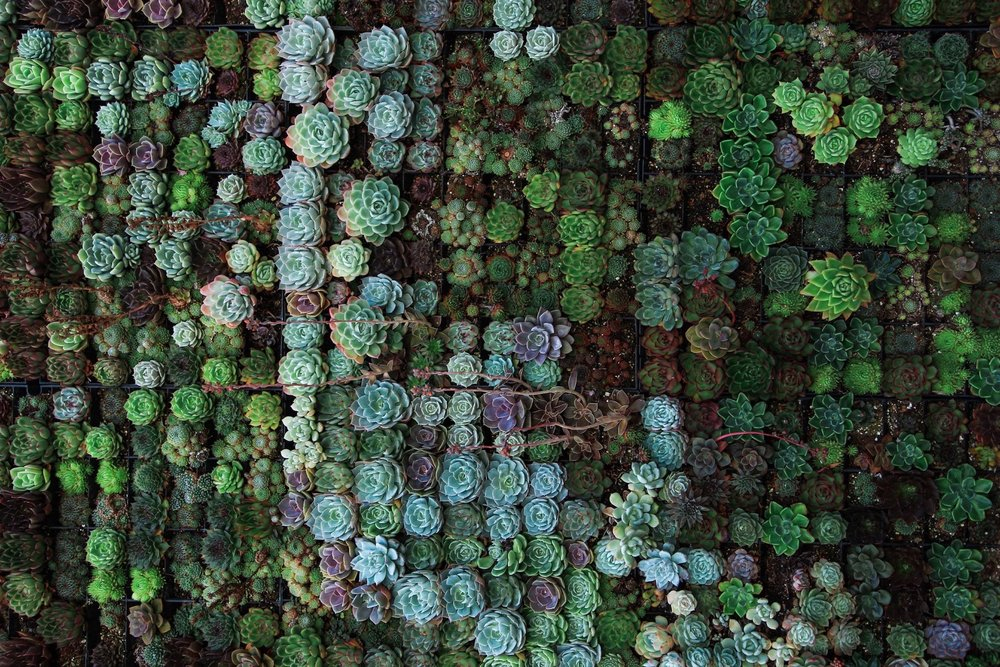Quick: Close Your Eyes - Picture a green roof. What do you see?If you're like most, your mind conjured the image of sweeping sedums, the low-growing succulents that have taken the greenroofing world by storm. Perhaps you see a few tufts of brushy grass. Maybe a footpath or two.