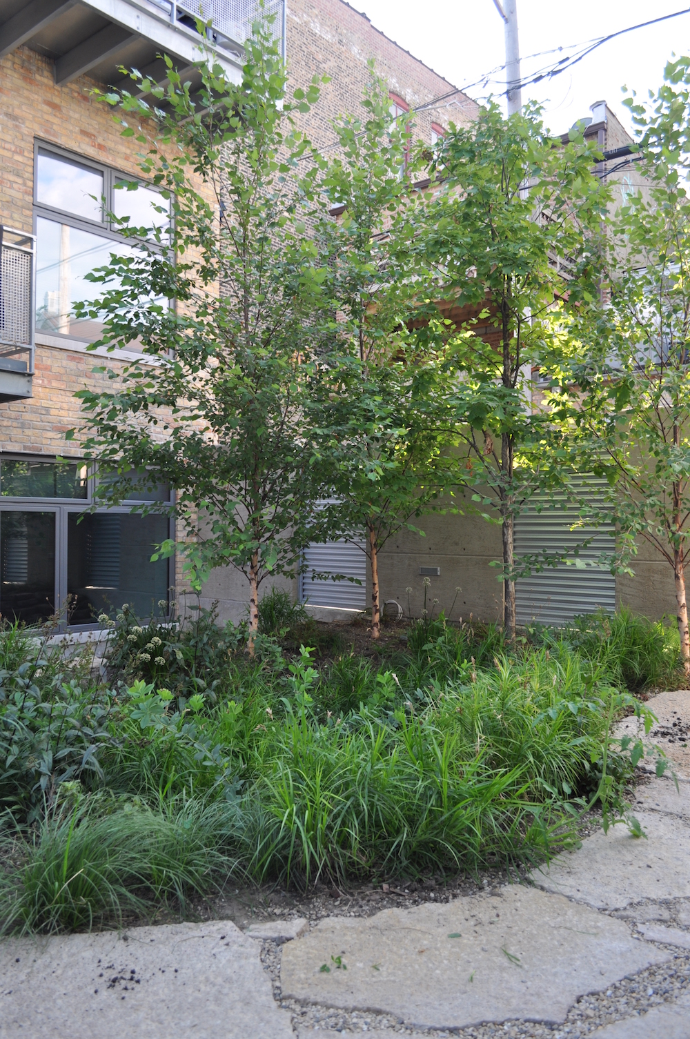 ecogardens-bucktown-adaptive-reuse-5.JPG