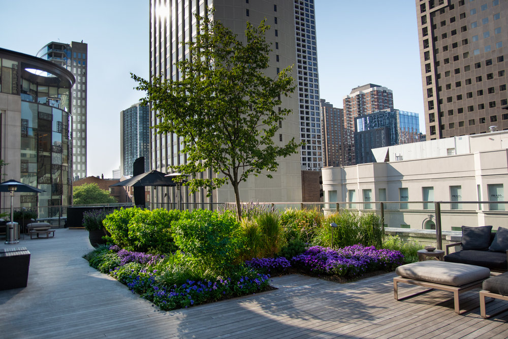 Suitsupply chicago roof garden by Ecogardens-4.jpg