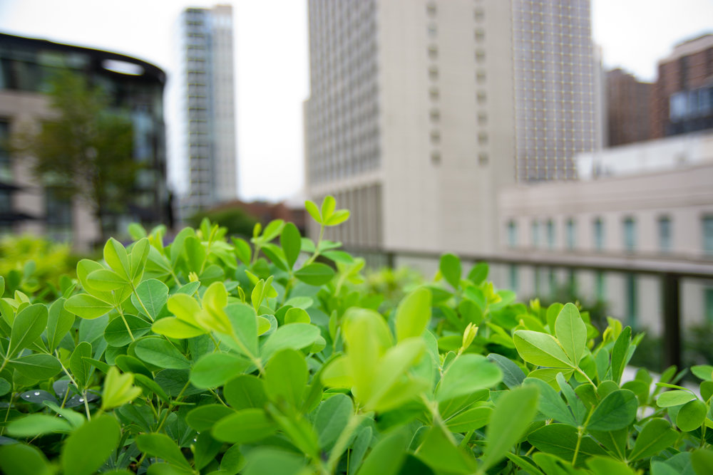 Suitsupply chicago roof garden by Ecogardens-9.jpg