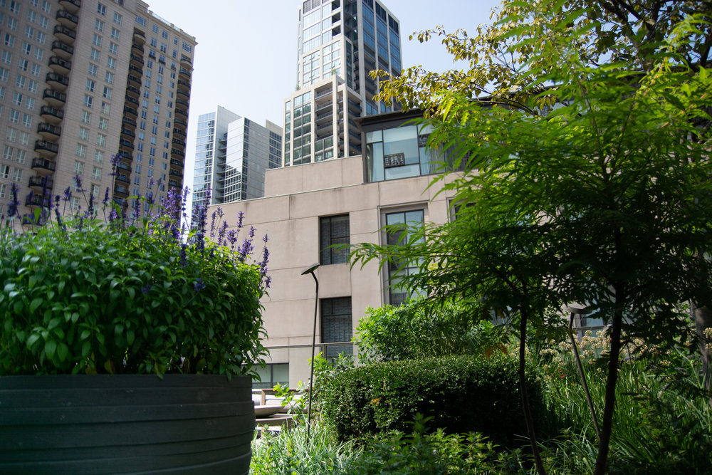 Suitsupply chicago roof garden by Ecogardens-11.jpg