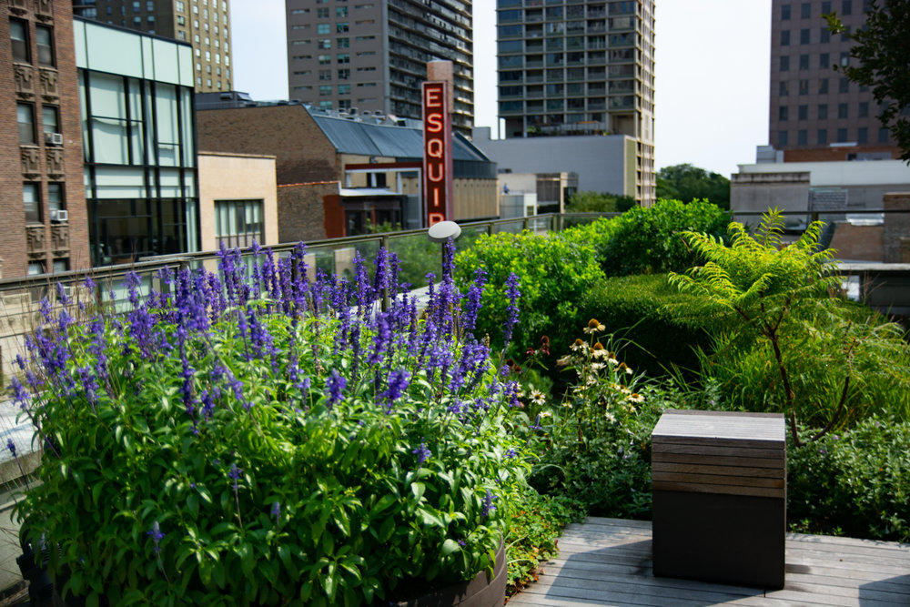 Suitsupply chicago roof garden by Ecogardens-12.jpg