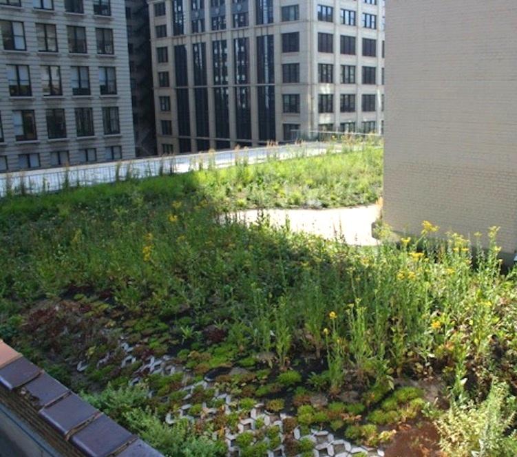 ecogardens-chicago-federal-building-14.jpg