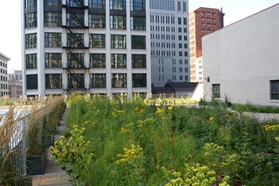 ecogardens-chicago-federal-building-12.jpg