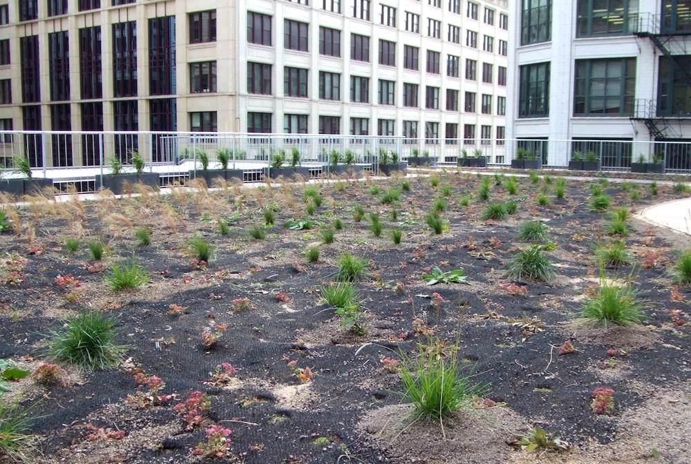 ecogardens-chicago-federal-building-7.JPG