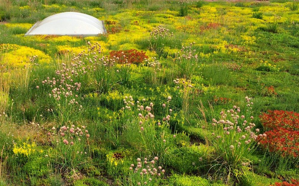 ecogardens-walmart-austin-16.jpg
