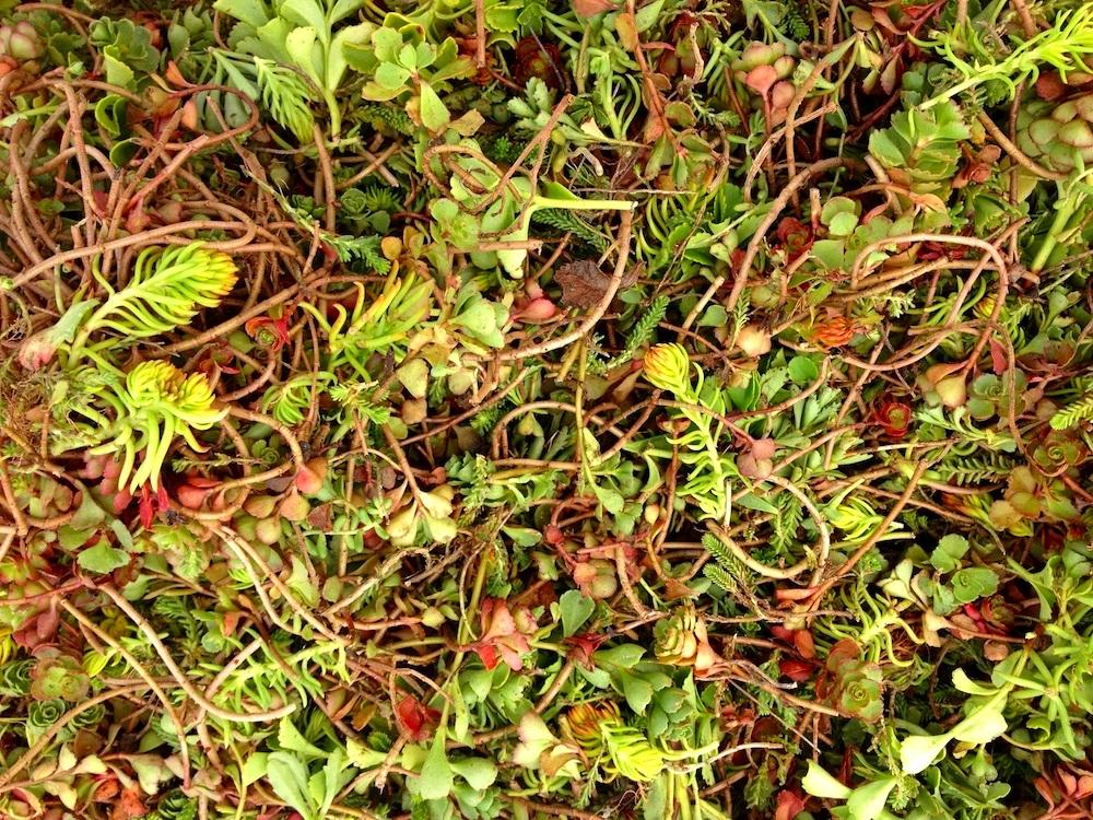 ecogardens-walmart-chatham-19.JPG