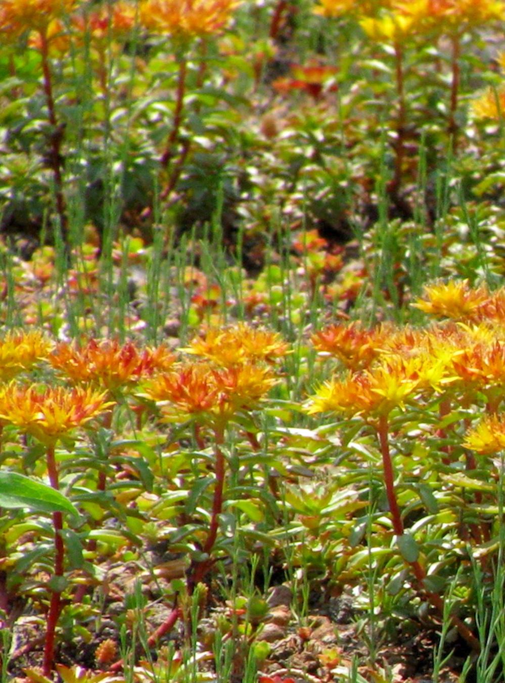 ecogardens-walmart-chatham-34.jpg
