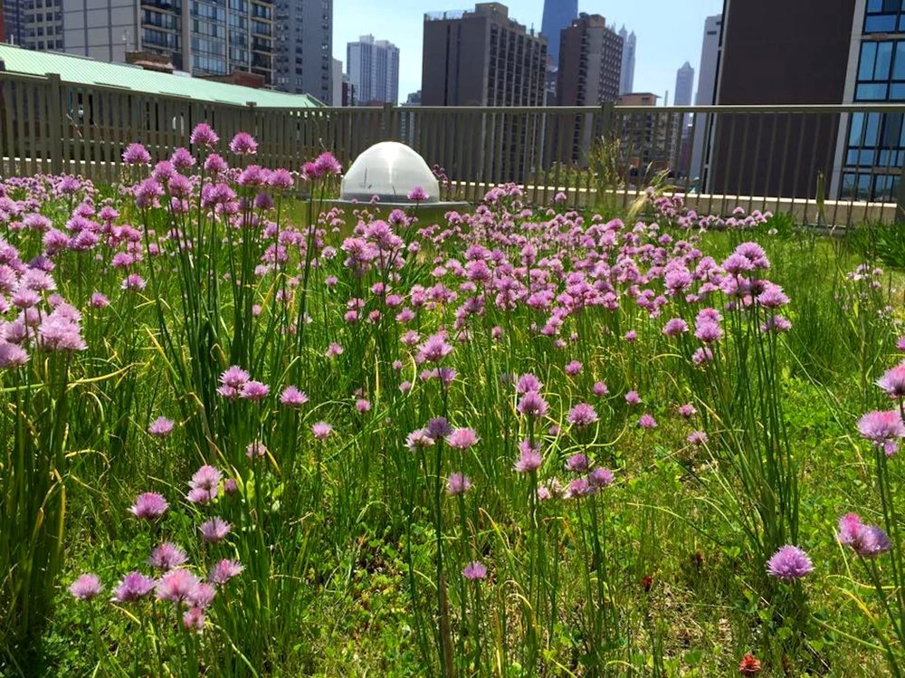 ecogardens-latin-middle-and-upper-1.jpg