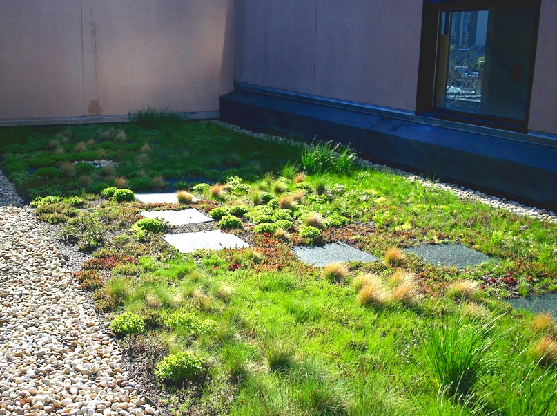 ecogardens-latin-middle-and-upper-7.jpg