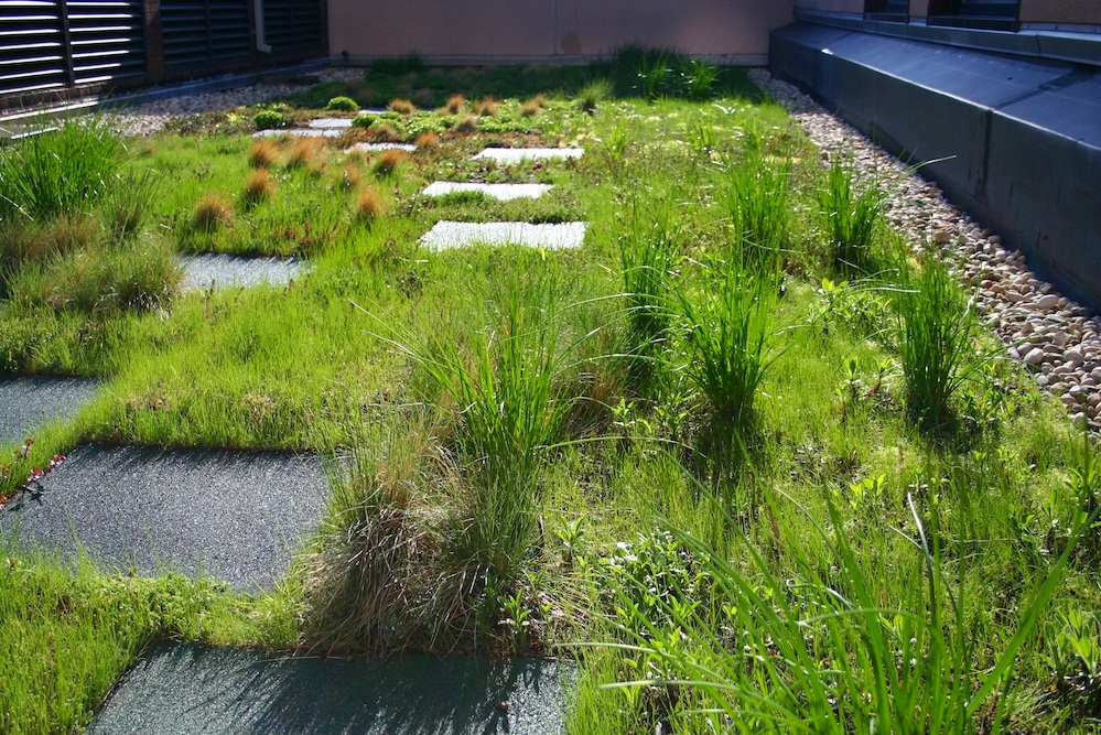 ecogardens-latin-middle-and-upper-6.jpg