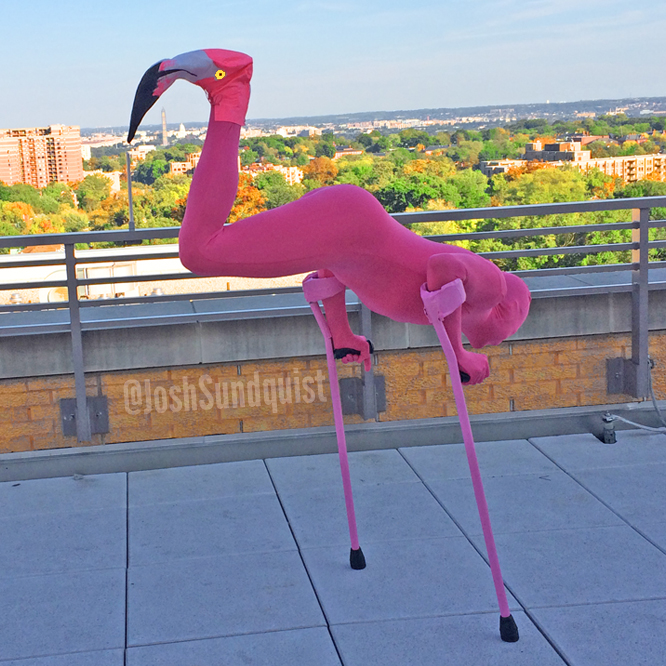 Flamingo (Halloween 2013).jpg