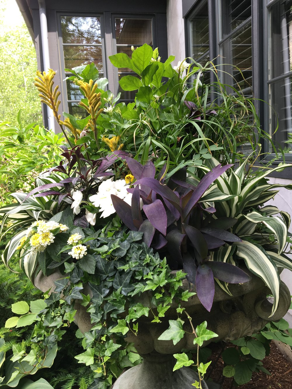 Container Gardens add texture and form to that special place where no other plant will grow.