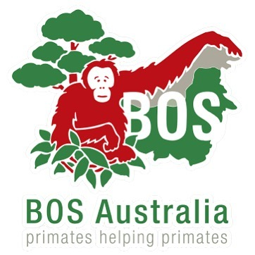 Introducing the Borneo Orangutan Survival Foundation to spread a little hope! BOS is the biggest primate conversation NGO worldwide. With hundreds of orangutans in its care, they manage orangutan rescue, rehabilitation, and re-introduction programmers in Kalimantan. It's a non-profit, locally started organization, and they deserve a million rounds of applause 👏👏 happy Friday!! -helen 💕