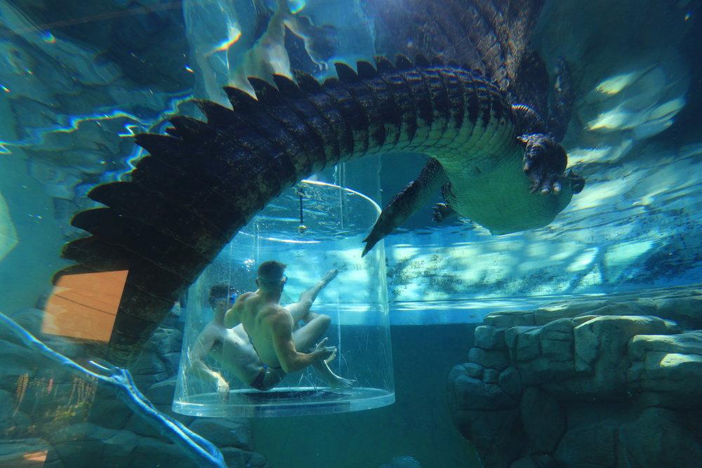 croc cove Darwin