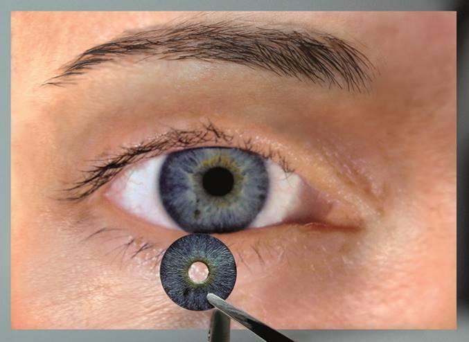 AI Comparison to Iris.jpg
