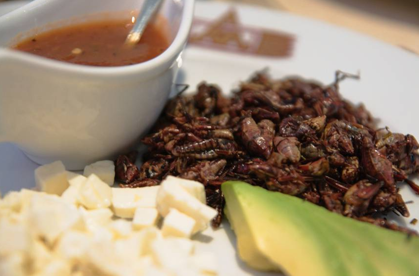 CC BY 2.0  wnhsl -- Grasshopper tacos, or tacos de chapulines, in southern Mexico